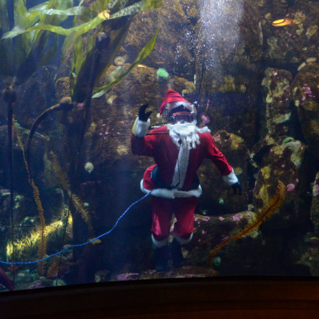 Holiday Fun at the Aquarium